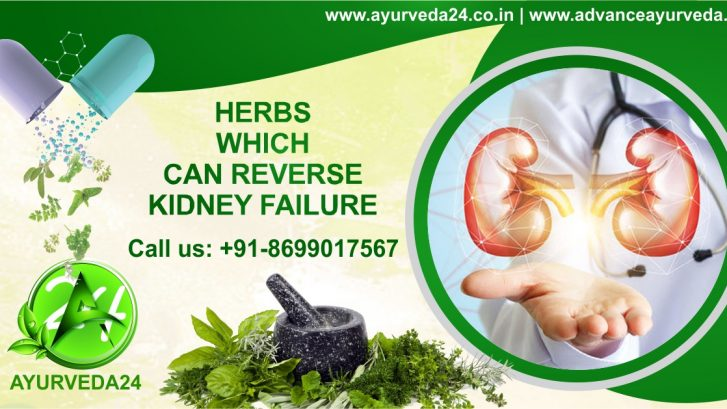 herbs for kidney